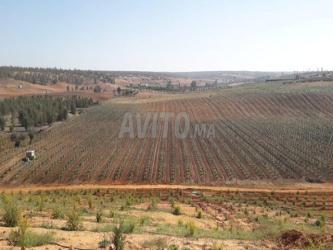 terrain et ferme en vente à moulay bousselham