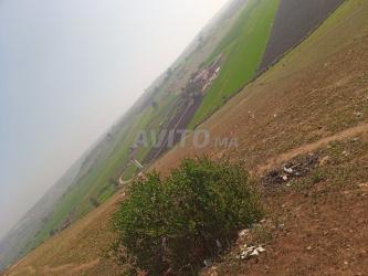 أرض نواحي المحمدية