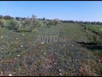 قطعة ارض للبيع بسيدي رحال الشاطئ 2500m2