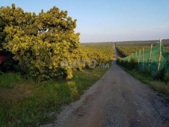 ferme des arbres avocat 340 hectares de vente