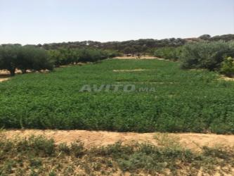 ferme de plus de 5 hectares guercif