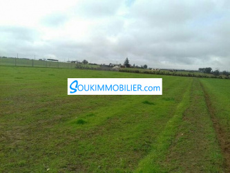5 hectares agricole bouskoura