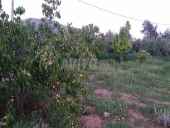ferme agricol équipée en vente a oujda