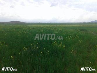 terrain agricole en vente à azemmour tnine chtouka