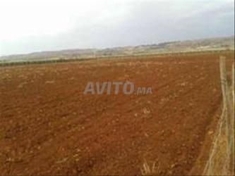 location terraine agricole à moulay bousselham