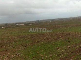 terrain de 10000 m2 à région el jadida