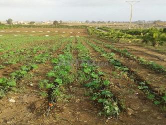 terrain agricole had soualem