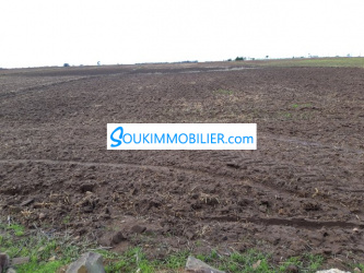 terrain de 10000 m2 à oued cherrat bouznika