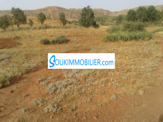 terrain à vendre ارض للبيع