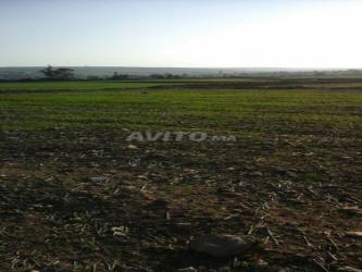 terrain agricole titré de 16000 m2
