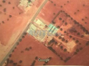 terrain de 1000 m2 à ain noqbi