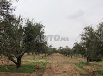 palemerie terre a vendre 2 hca