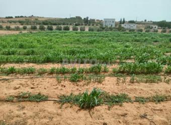 terrain agricole a vendre 1 hectare