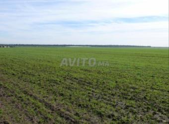 Terrain/ferme 5500 m2 à Oulad salah-bouskoura
