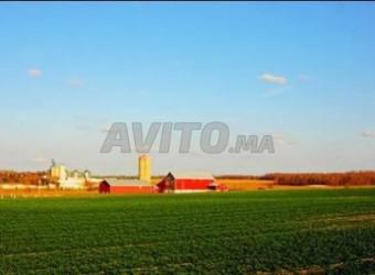 une ferme de 38 hectares a la région d el jadida