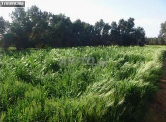 ferme de 6 hectares a la région d el jadida