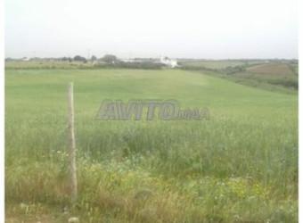 terrain plus de 10 hektar pour r plus 3 et 4