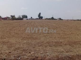 terrain à vente à bouskoura