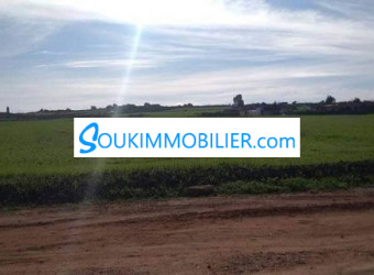 terrain de 1 hectare a 15 hectares agricole