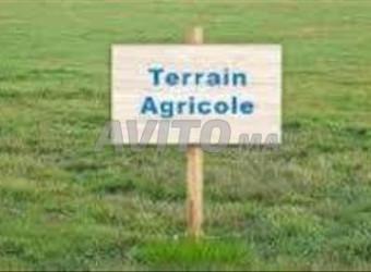 terrain agricole 10 hictar titré 17km d\'oujda